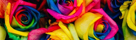 roses multicolores synesthesie