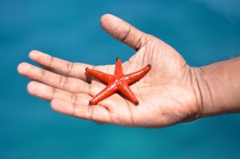 starfish-1198230_1280