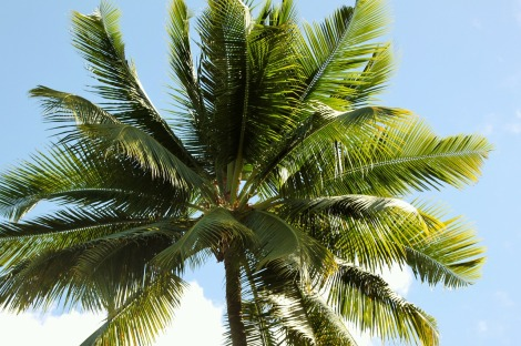 palm-207175_1280